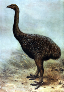 Image 2: Moa reconstruction.Image credit: Extinct Birds, Lionel Walter Rothschild, 1907, public domain.