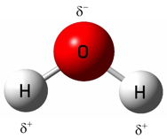 Figure 2: The charge distribution or dipole moment in a water molecule (where δ+ denotes partial-positive charges and δ- a partial-negative charge). Image credit: John Millam