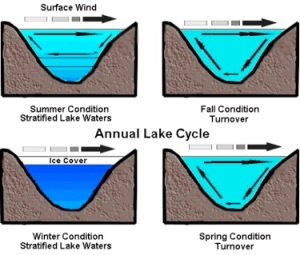 Figure 5. Annual lake cycle showing the different water layers and the churning of the waters by the wind. Image used with permission: Keith C. Heidorn, PhD, The Weather Doctor.