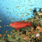 How Can Fish Live at Different Ocean Depths?