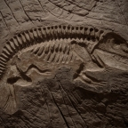 Q&A: Are There Transitional Intermediates in the Fossil Record?