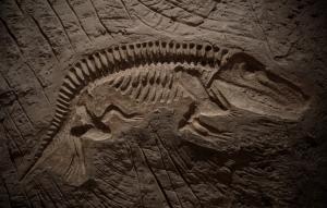 fossil-dino-fish