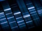 Gene Architecture Illuminates the Brilliance of Life's Molecular Logic