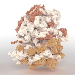 ribosome-3d-1