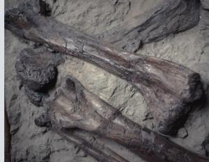 fossilized-bones-1