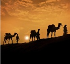 Q&A: Does the Bible Misrepresent the Domestication of Camels?