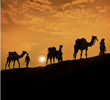 camel-sunset-domesticated-1