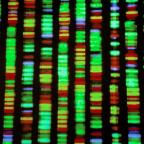 Three (More) Reasons Why Junk DNA Is No Longer Evidence for Evolution