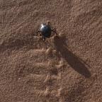 Beetles Inspire an Engineering Breakthrough