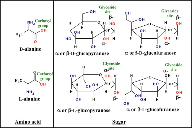 structures of alanine and glucose